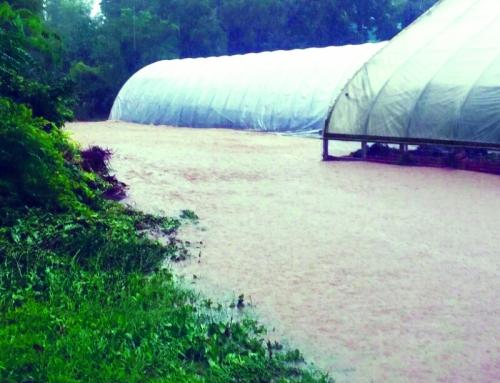 Flood Recovery Fundraiser for Blue Heron Farm