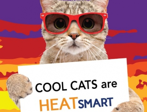 Get Pumped about Energy Efficiency with HeatSmart