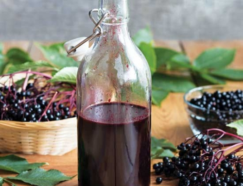 Do-It-Yourself Immune Booster: Elderberry Syrup