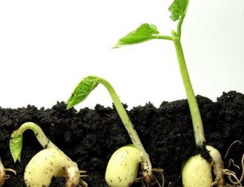 Sow What? Choosing to Grow from Seed